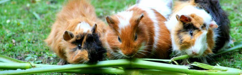 cute-grass-green-63853 (1)